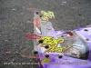 www-fastharry-com-hpi-corvette-body-5